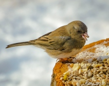 2016_12_19_places_back-yard-birding_0050