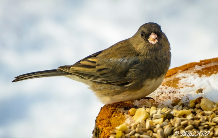 2016_12_19_places_back-yard-birding_0051