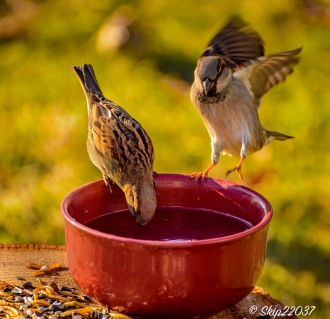 2017_01_01_places_back-yard-birding_0006