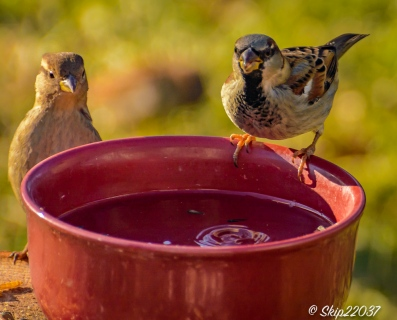 2017_01_01_places_back-yard-birding_0011