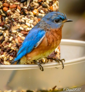Bluebird in charge!