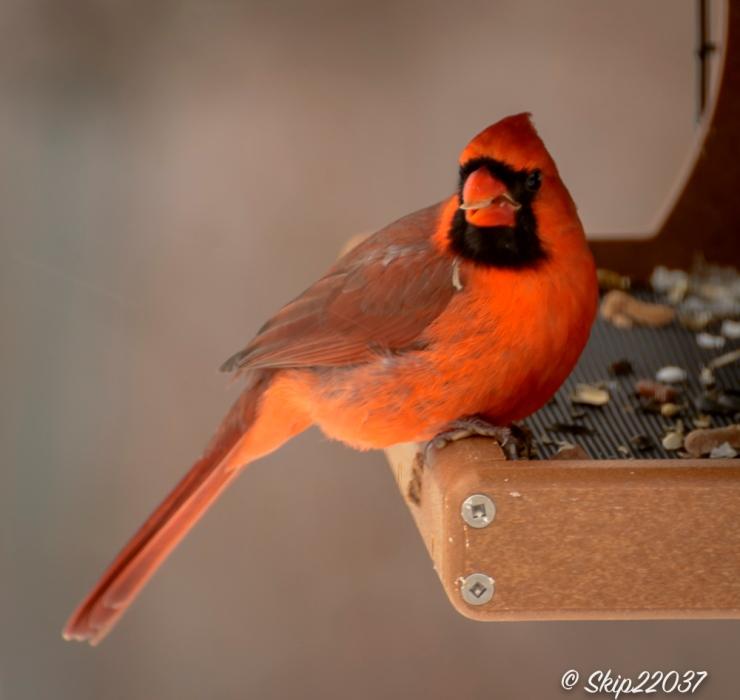 2017_01_06_places-backyard-buffet_back-yard-birding_0008