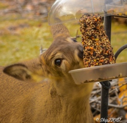 2017_01_16_places-backyard-buffet_back-yard-birding_0037