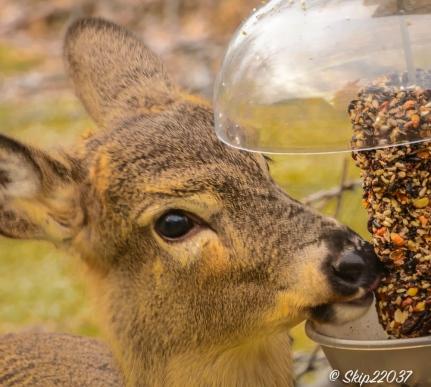 2017_01_16_places-backyard-buffet_back-yard-birding_0044