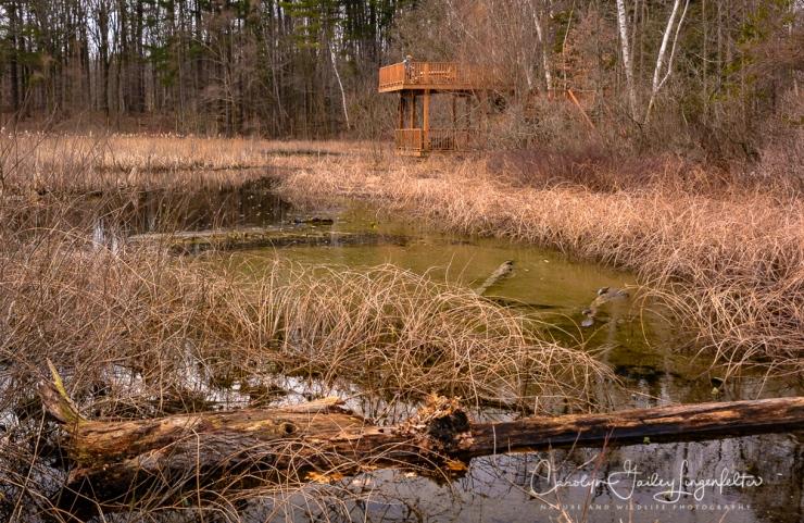2017_02_21_holden-arboretum_winter-trail-walk_0051