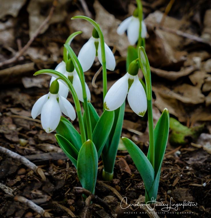 2017_02_21_holden-arboretum_winter-trail-walk_0069-edit