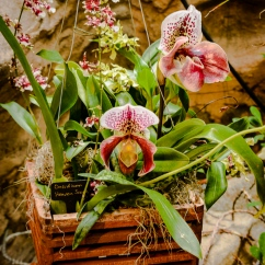 2017_02_24_places_botanical-gardens-orchid-mania_0024