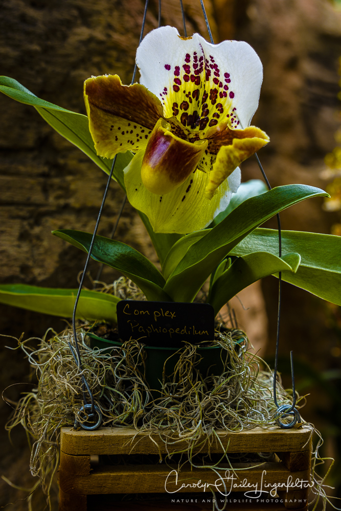 2017_02_24_places_botanical-gardens-orchid-mania_0028