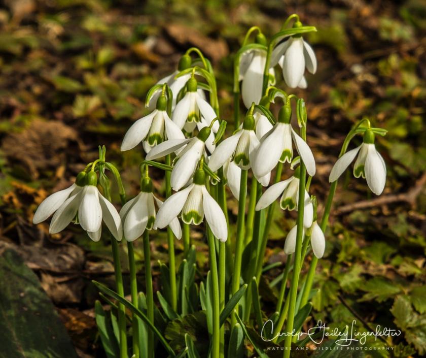 2017_02_28_holden-arboretum_winter-trail-walk_0142
