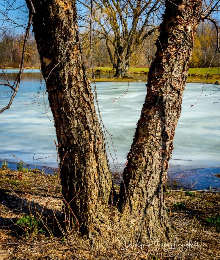 2017_03_21_Holden Arboretum_Early spring trail walk_0003-Edit