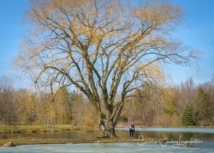 2017_03_21_Holden Arboretum_Early spring trail walk_0005