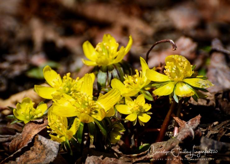 2017_03_21_Holden Arboretum_Early spring trail walk_0039