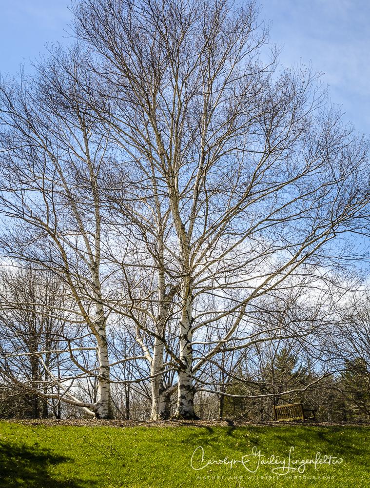 2017_03_29_Holden Arboretum_037