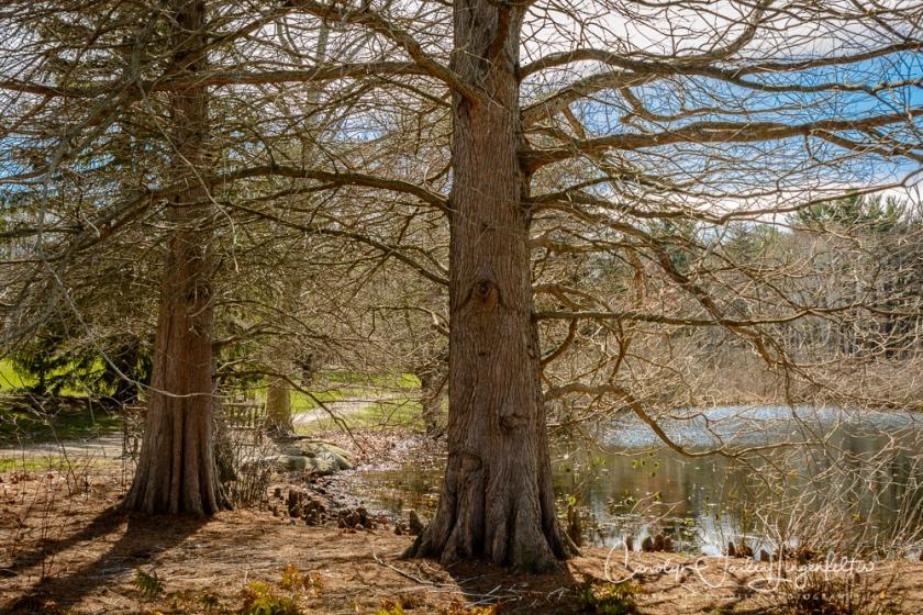 2017_03_29_Holden Arboretum_041