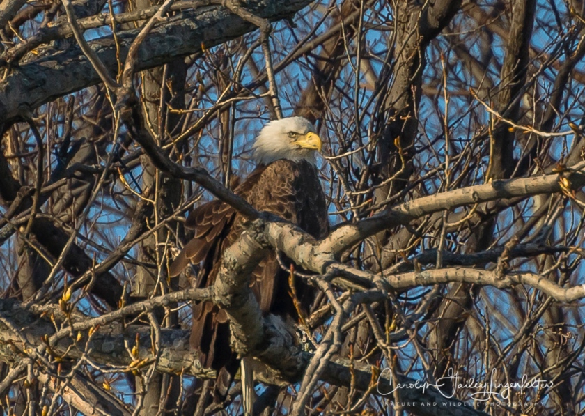 2017_04_07_Bruce Yee Park_eagles0049