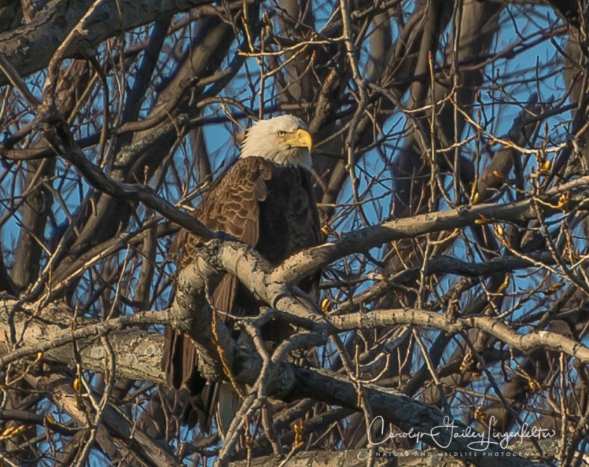 2017_04_07_Bruce Yee Park_eagles0112