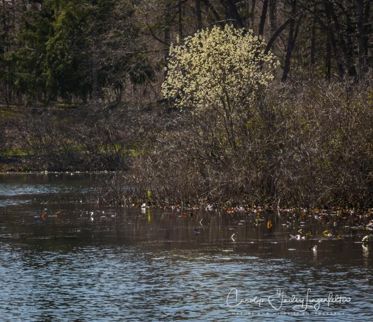 2017_04_12_Places_Holden Arboretum0016