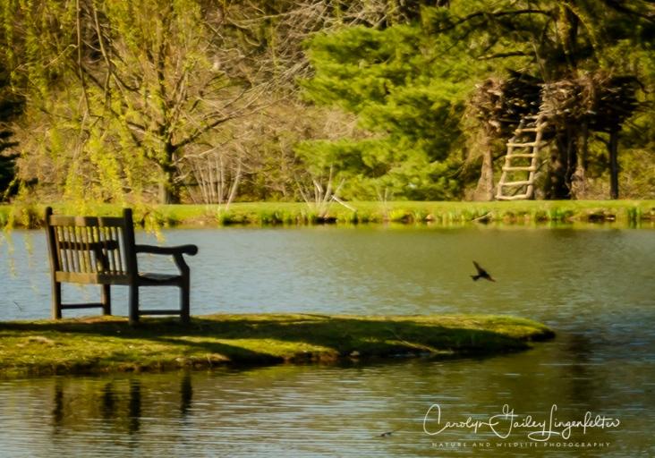 2017_04_12_Places_Holden Arboretum0045