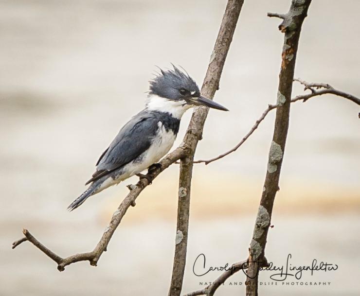 2017_04_19_Places_Chagrin River Park0029