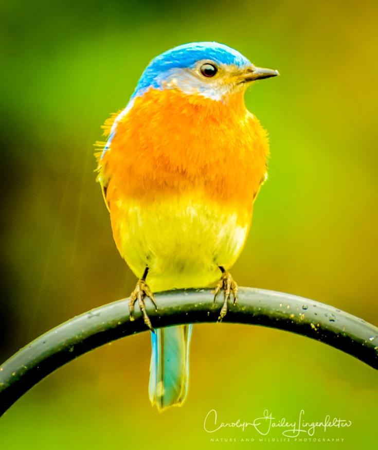 2017_04_28_Places_Backyard birding0005-Edit