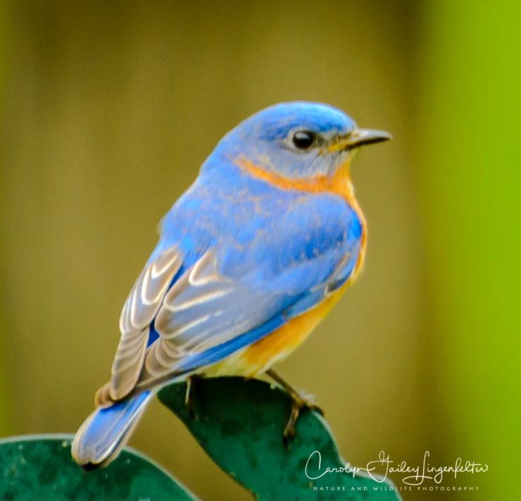2017_05_02_Places_Backyard birding0062