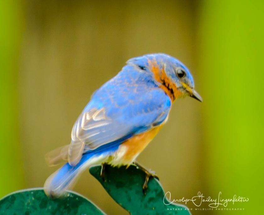 2017_05_02_Places_Backyard birding0063