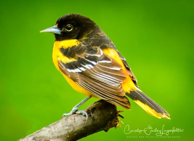 2017_05_02_Places_Backyard birding0064-Edit