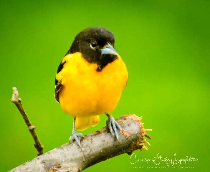 2017_05_02_Places_Backyard birding0067