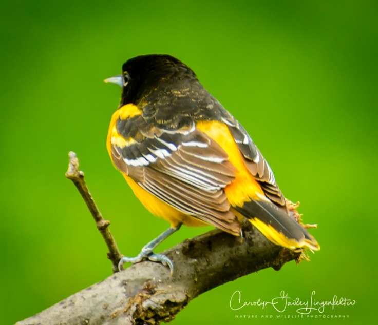 2017_05_02_Places_Backyard birding0070
