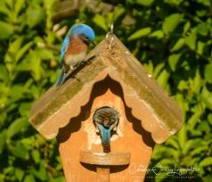 2017_05_15_Places_backyard buffet_0111