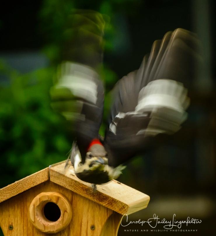 2017_05_20_Places_Backyard birding_0021
