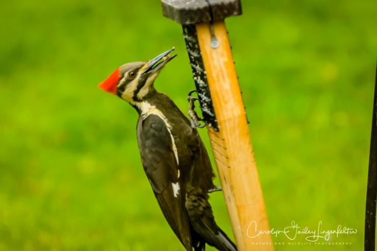 2017_05_20_Places_Backyard birding_0027
