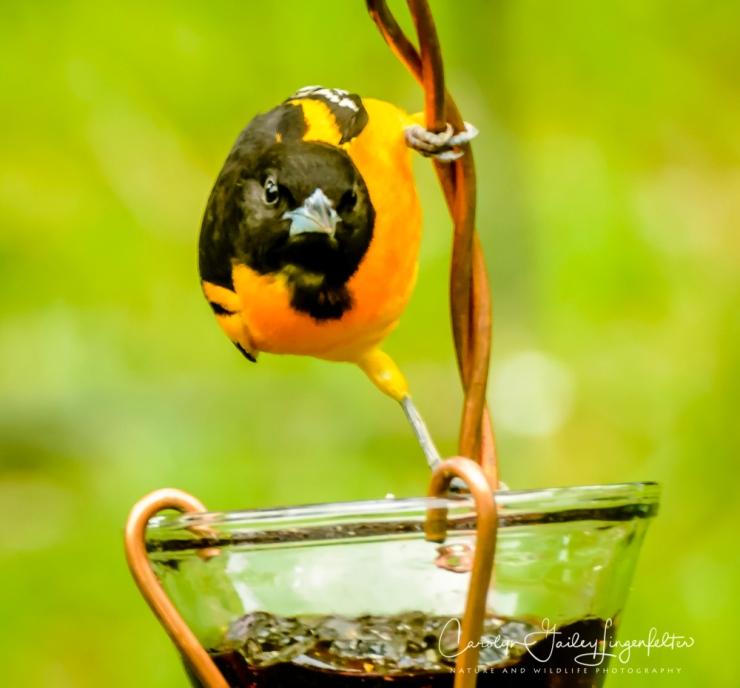 2017_05_20_Places_Backyard birding_0032