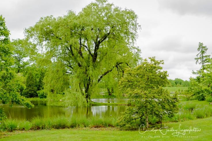 2017_05_26_Places_Holden Arboretum_0006