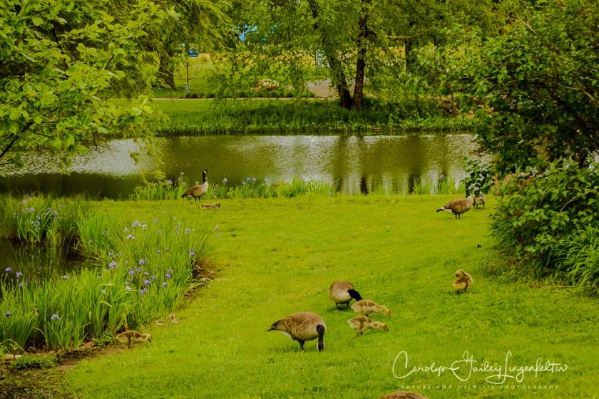 2017_05_26_Places_Holden Arboretum_0010