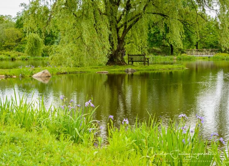 2017_05_26_Places_Holden Arboretum_0012