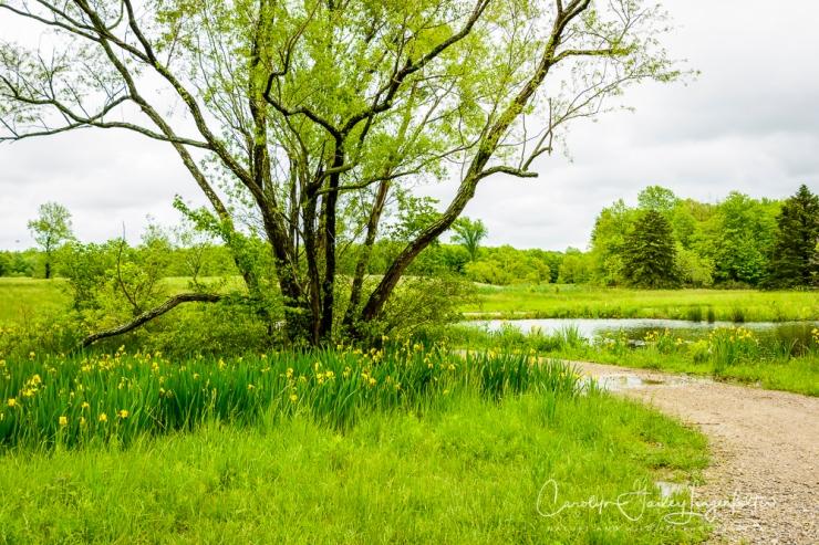 2017_05_26_Places_Holden Arboretum_0016