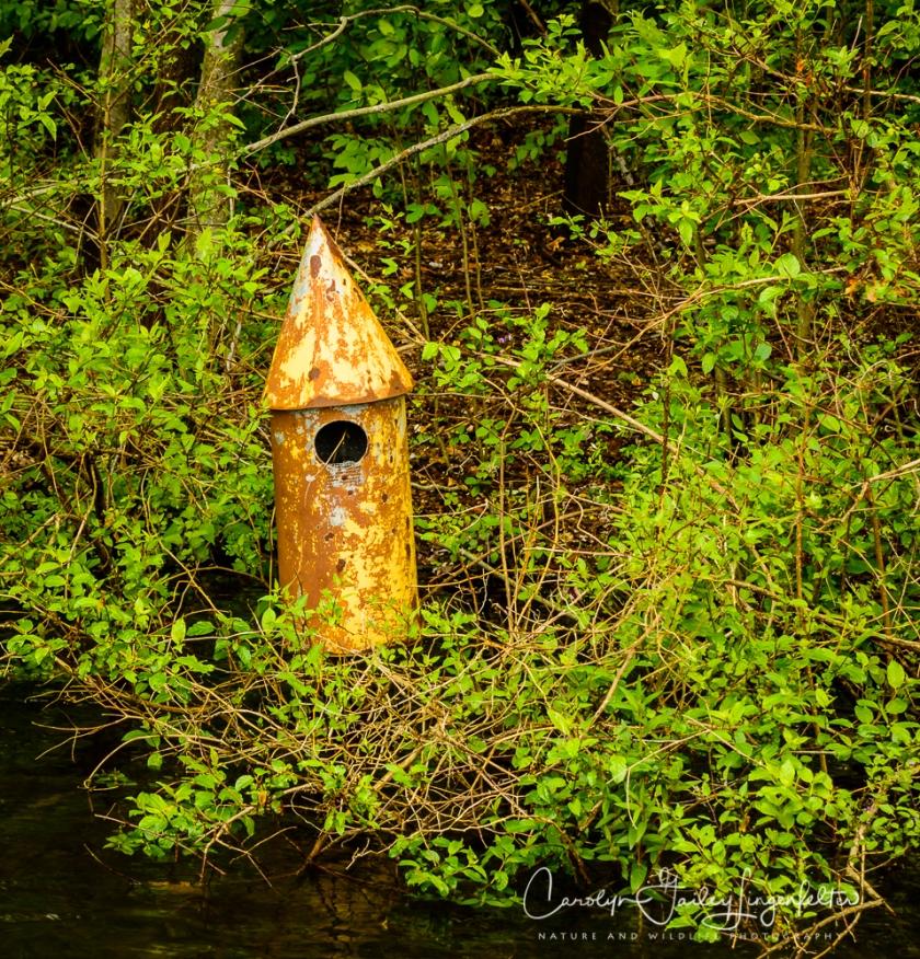2017_05_26_Places_Holden Arboretum_0030