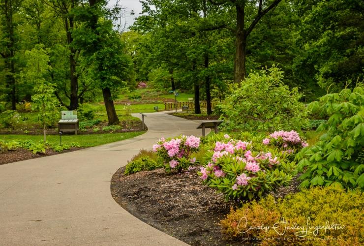 2017_05_26_Places_Holden Arboretum_0041