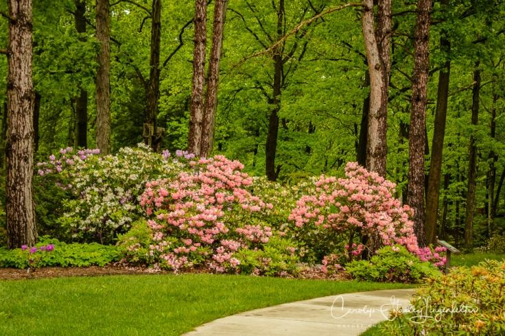 2017_05_26_Places_Holden Arboretum_0044