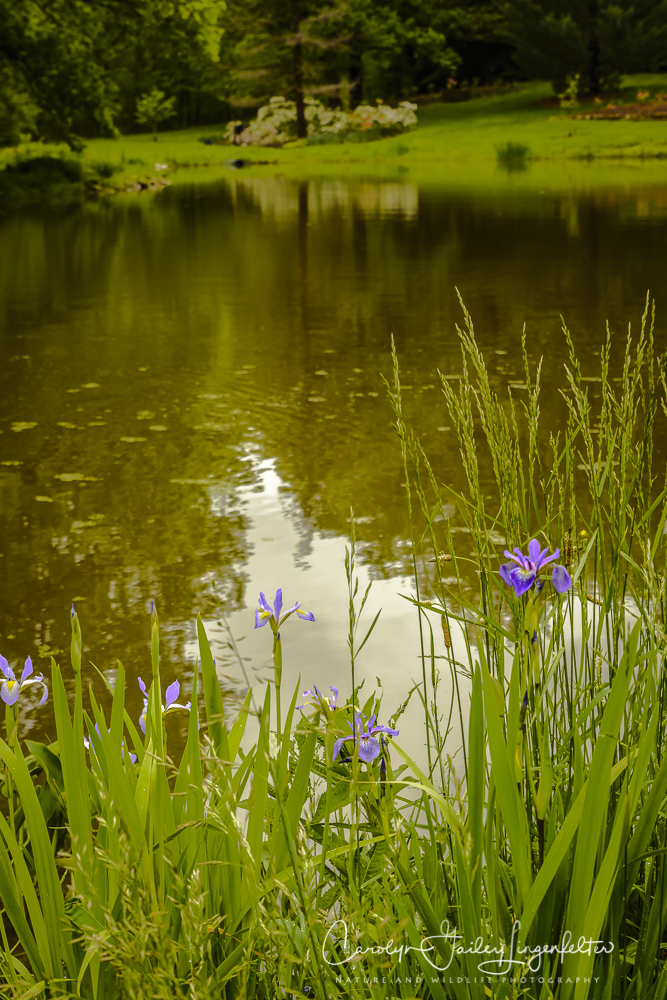 2017_05_26_Places_Holden Arboretum_0046