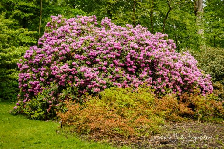 2017_05_26_Places_Holden Arboretum_0062