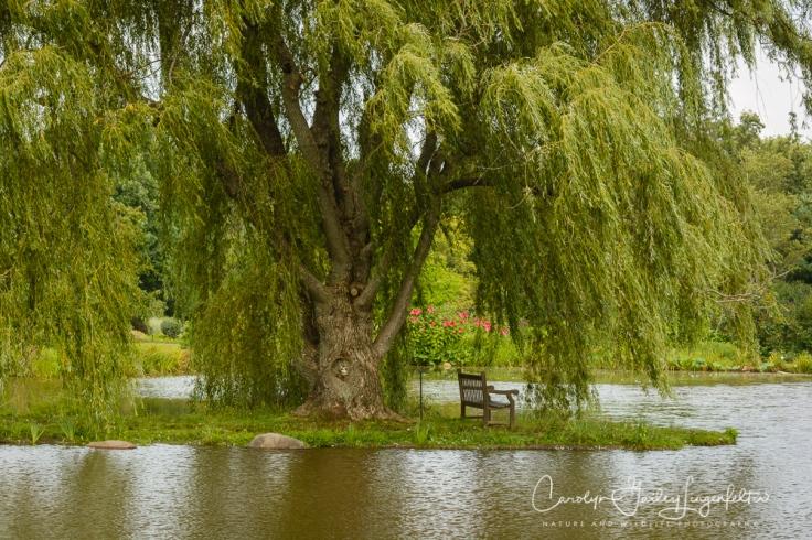 2017_08_17_Summer 2017_Holden Arboretum_0031