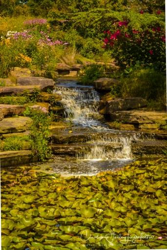 2017_08_25_Summer 2017_Holden Arboretum_0104