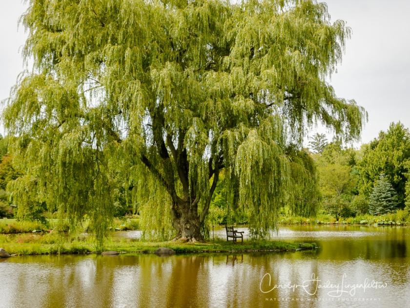 2017_09_01_Summer 2017_Holden Arboretum_0027