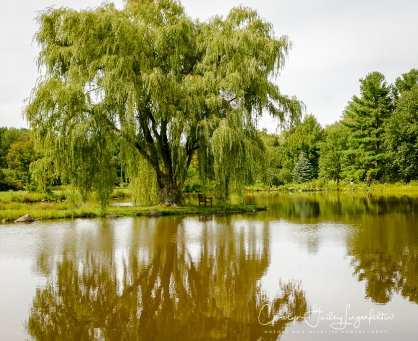 2017_09_01_Summer 2017_Holden Arboretum_0029