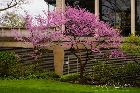2017_04_21_Cleveland_Botanical Garden0048
