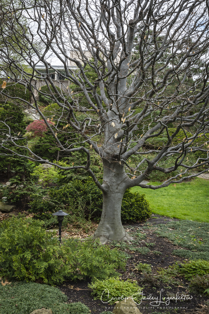 2017_04_21_Cleveland_Botanical Garden0051