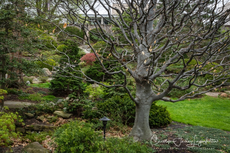 2017_04_21_Cleveland_Botanical Garden0052