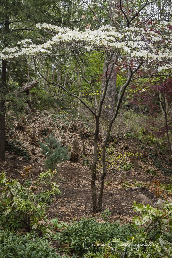 2017_04_21_Cleveland_Botanical Garden0053
